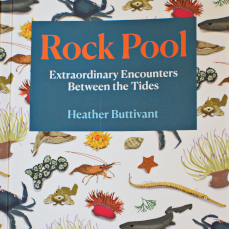 rock pool heather buttivant