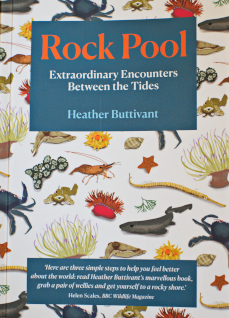 rock pool heather buttivant