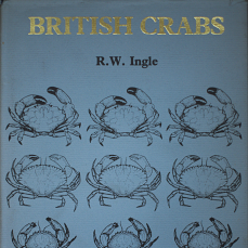 british crabs ingle 1980