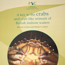 key to crabs
