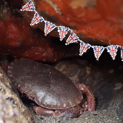 UK crab